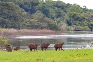 A diversidade de vida nas margens do rio Iriri é preservada pelas comunidades locais (Foto: Daniela Alarcon)