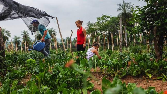 """""""Todo el sistema está enfocado a apoyar al agronegocio y no a lo orgánico"""""""