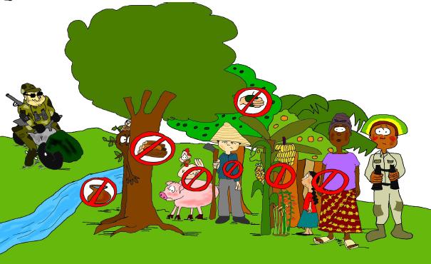 Florestas, mudança climática, mercados de carbono e o REDD+