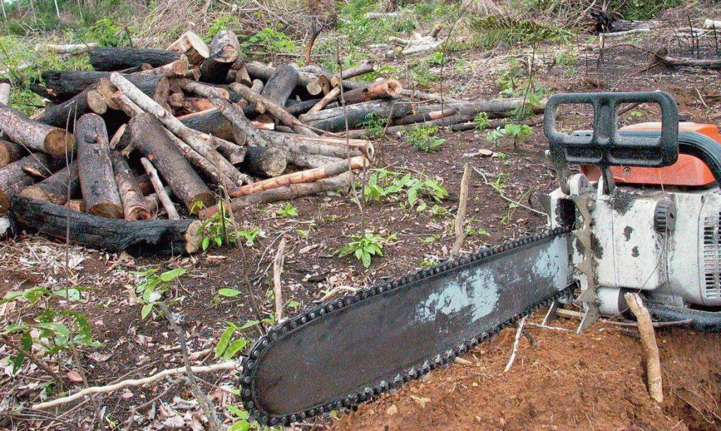Desmatamento / Foto: Wilson Dias - Agência Brasil